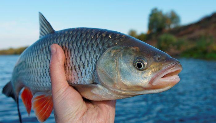 رصد مضادات اكتئاب في أدمغة الأسماك، فماذا يعني هذا الاكتشاف المفاجئ؟