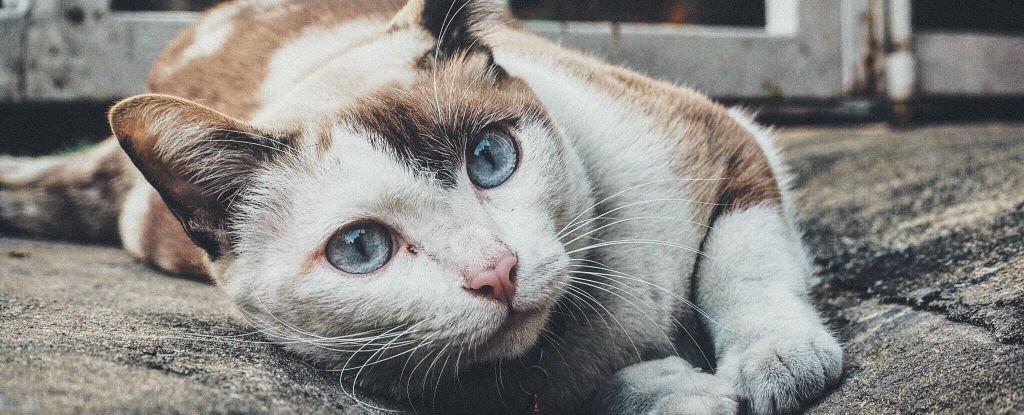 تسجيل اول حالة عدوى لمرض انفلونزا الطيور من القطط للانسان