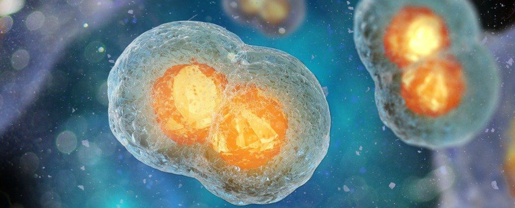 علماء يكتشفون الساعة الداخلية للخلايا الحية