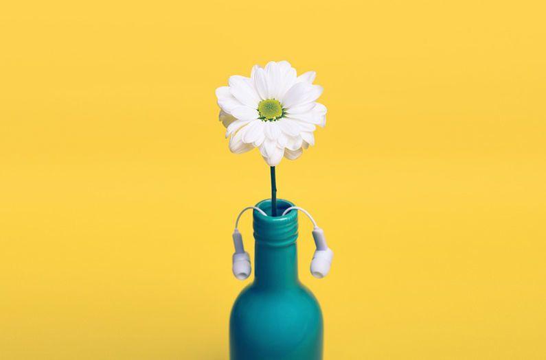 هل تسمع النباتات؟