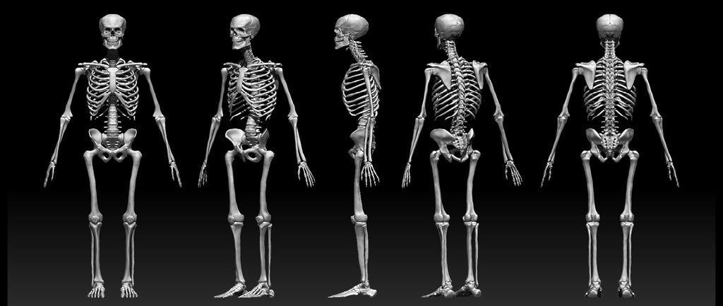تعرفوا معنا على عظام الإنسان