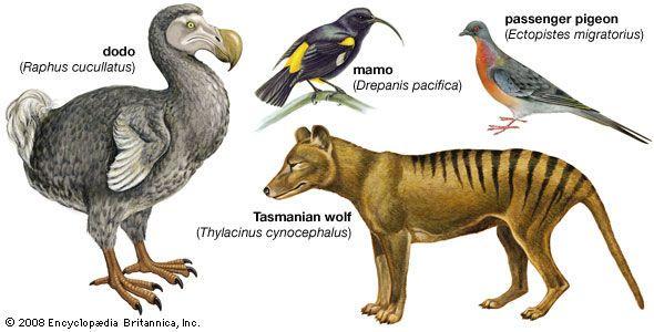 كيف يحدث الانقراض انقراض الأنواع الحية الانقراضات التي سببها الإنسان الانقراض الجماعي تدمير بيئة الكائنات الحية انقراض العصر الطباشيري