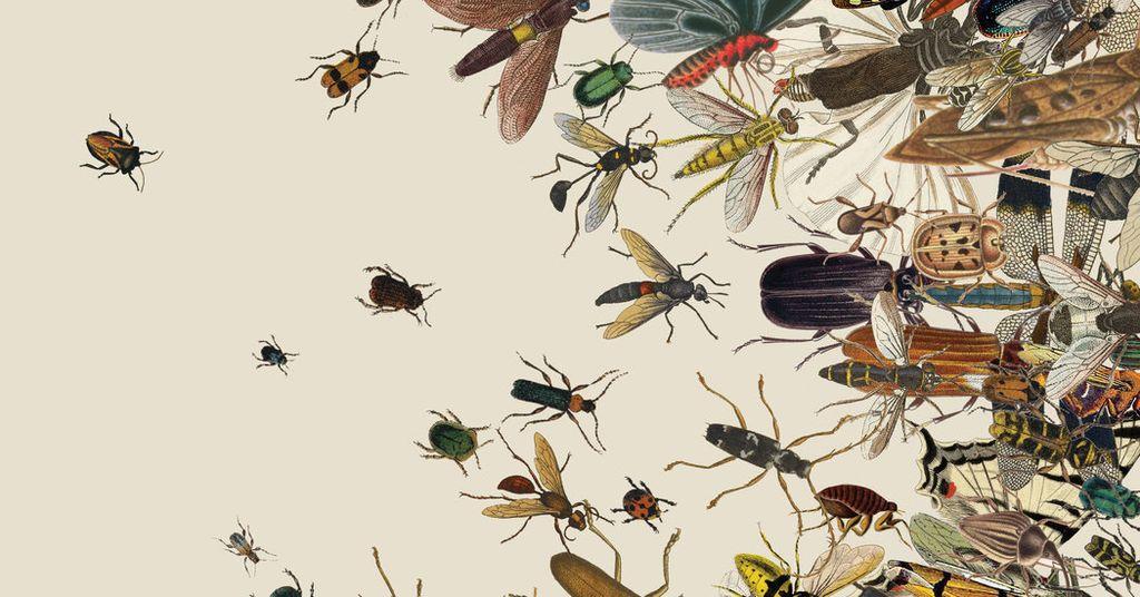 معظم كتب البيولوجيا تهمل الحشرات - أكثر الحيوانات وفرة على الكوكب