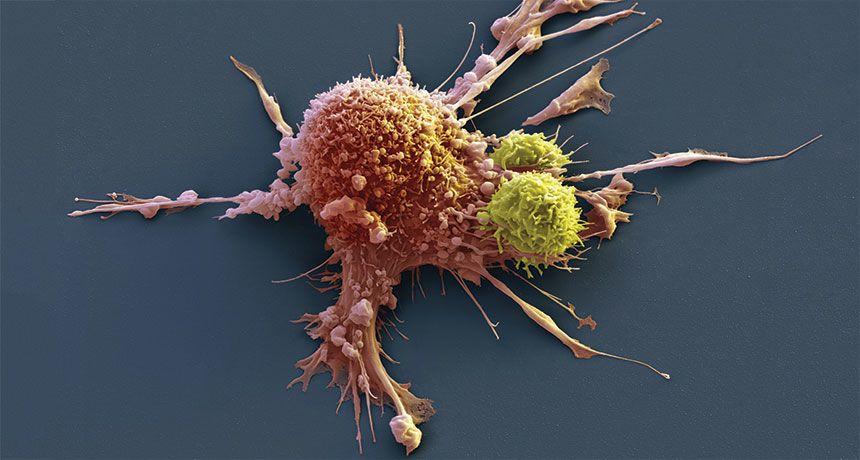 """كيف يمكن جعل علاجات الخلايا """"CAR-T"""" من أجل السرطان أكثر أمانًا وفعاليةً؟"""