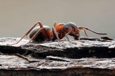 تمكُّن النمل المحجوز في مستودع نووي سوفيتي من النجاة بطريقة مرعبة جدًا عيش مجموعة من النمل دون وجود طعام أو ضوء أو مهرب في مستودع نووي