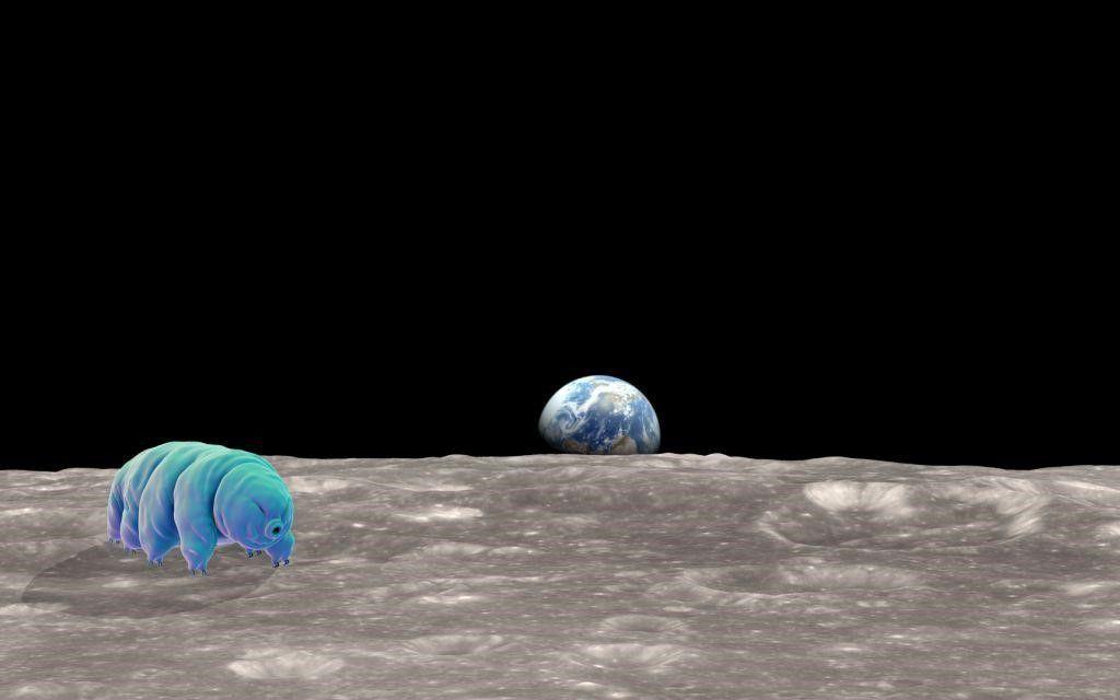انتشار آلاف من دببة الماء (التارديغرادا) على القمر بعد محاولة هبوط فاشلة البقاء على قيد الحياة في الفضاء الكائنات الوحيدة القادرة على الحياة على القمر