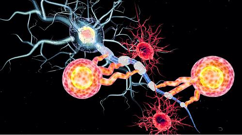 الخلايا النجمية أكثر خلايا الجهاز العصبي المركزي العصبونات التي تطلق النواقل العصبية النواقل الدبقي علاقة خلايا الدبق العصبي بالذكريات