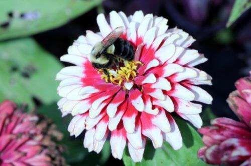 يجب على البشر تغيير تصرفاتهم إذا أرادوا إنقاذ العسل