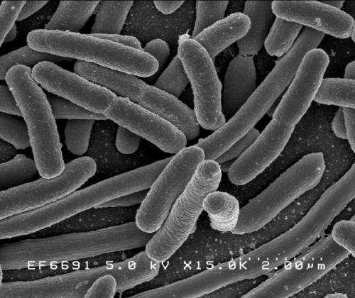 دراسة: البكتيريا قادرة على تغيير مدة سباتها لمقاومة المضادات الحيوية