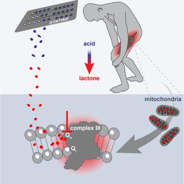 اعتلال العضلات الناتج عن تناول أدوية خفض الكوليسترول التقليل من خطر الإصابة بالسكتة الدماغية أو الذبحات الصدرية اضطراب طبي مؤلم يصيب العضلات الهيكلية