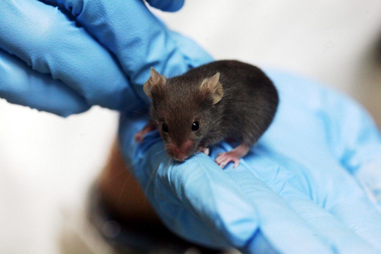 منح الفئران القدرة على الرؤية الليلية عن طريق حقن جسيمات نانوية في أعينها