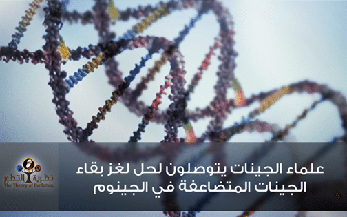 علماء الجينات يتوصلون لحل لغز بقاء الجينات المتضاعفة في الجينوم