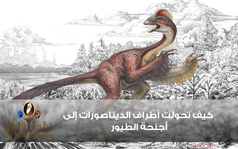 كيف تحولت أطراف الديناصورات إلى أجنحة الطيور ..