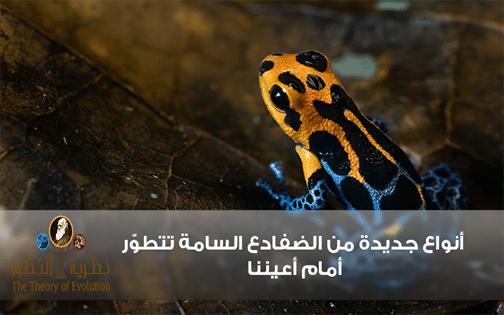 أنواع جديدة من الضفادع السامة تتطوّر أمام أعيننا