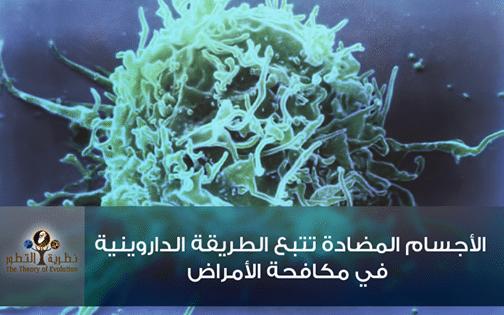 الأجسام المضادة تتبع الطريقة الداروينية في مكافحة الأمراض