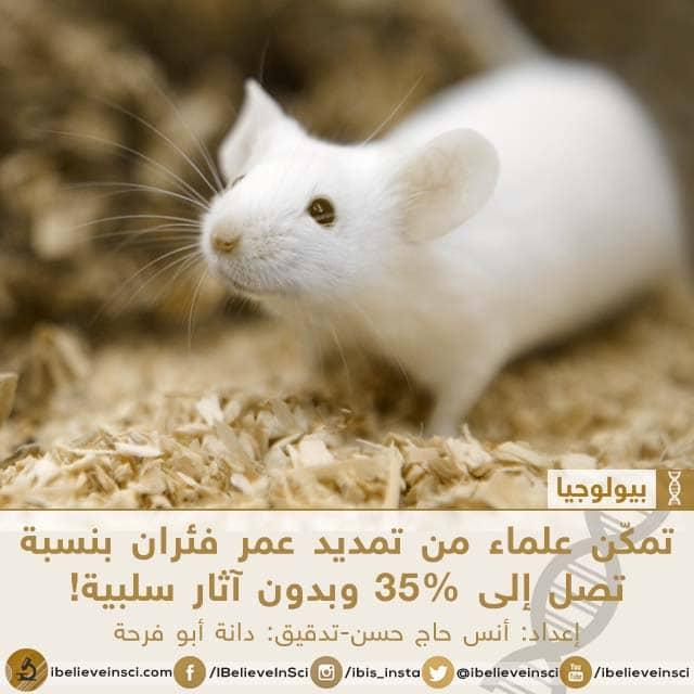 تمكّن علماء من تمديد عمر فئران بنسبة تصل إلى 35% وبدون آثار سلبية