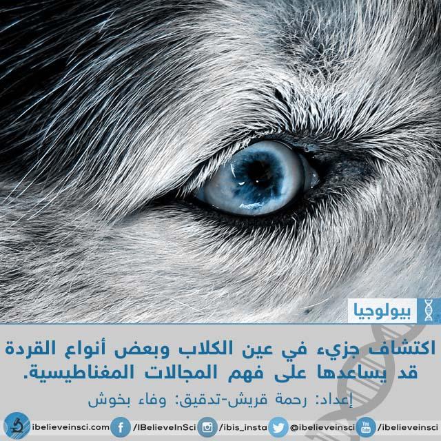 اكتشاف جزيء في عين الكلاب وبعض أنواع القردة قد يساعدها على فهم المجالات المغناطيسية.