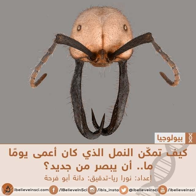 كيف تمكّن النمل الذي كان أعمى يومًا ما.. أن يبصر من جديد؟