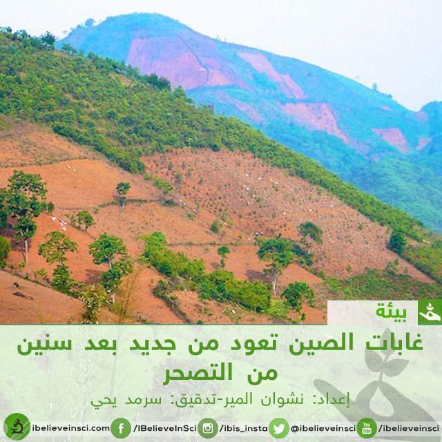غابات الصين تعود من جديد بعد سنين من التصحر