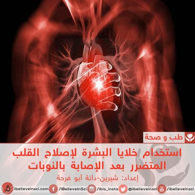 استخدام خلايا البشرة لإصلاح القلب المتضرر بعد الإصابة بالنوبات