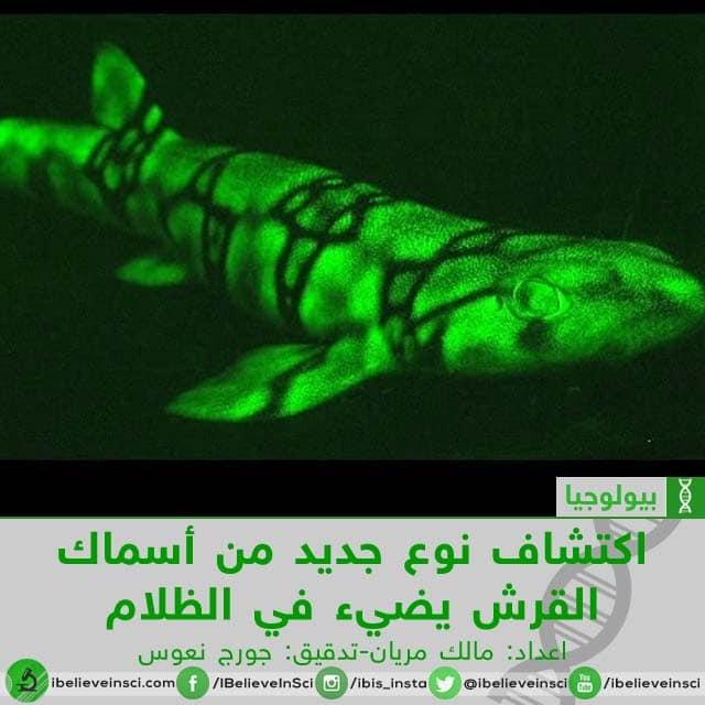 اكتشاف نوع جديد من أسماك القرش يضيء في الظلام
