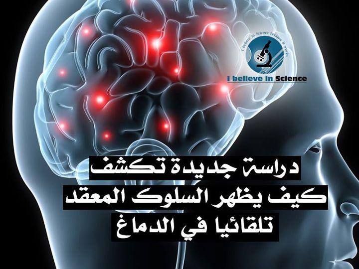دراسة جديدة تكشف كيف يظهر السلوك المُعقّد تلقائيًا في الدّماغ