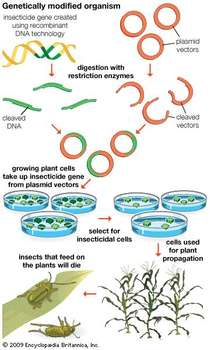 What Biotechnology Biology Genetic Engineering Genetic Engineering Genetically Modified Therapeutic Proteins Production of red and white blood cells