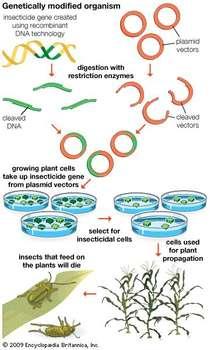 ما هي التكنولوجيا الحيوية علم الأحياء الهندسة الجينية الهندسة الوراثية البروتينات العلاجية المعدلة وراثيًا إنتاج خلايا الدم الحمراء والبيضاء