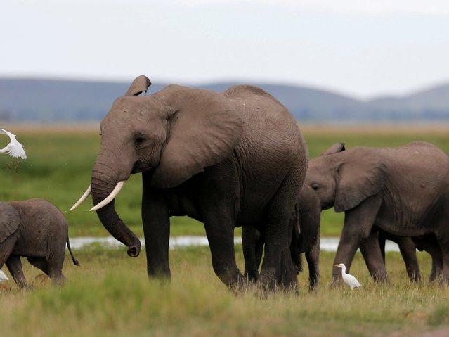 قائمة بأشد 15 حيوان فتكًا على وجه الأرض! - ما هي الحيوانات المسؤولة عن معظم وفيات البشر - أكثر الحيوانات الفتاكة الموجودة على الكوكب