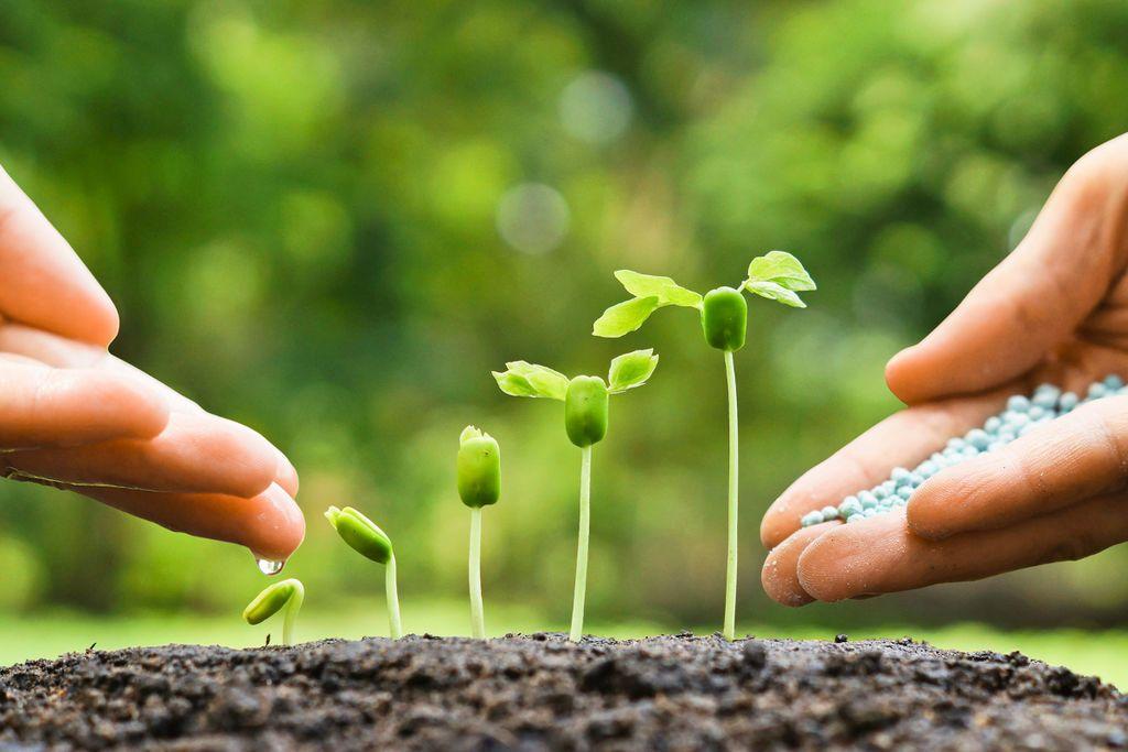 التكاثر في النباتات: ما هي أنواع التكاثر عند النباتات وكيف يتم كل منها؟
