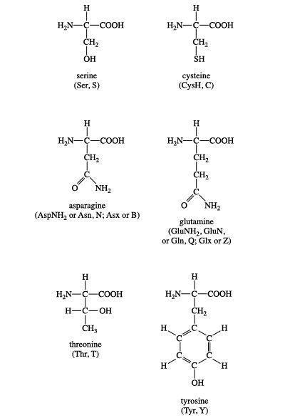 ما هي الأحماض الأمينية الحمض الأميني جزيئات عضوية تحتوي على مجموعة الأمين الأساسية مجموعة حمض الكربوكسيل كربون البروتينات