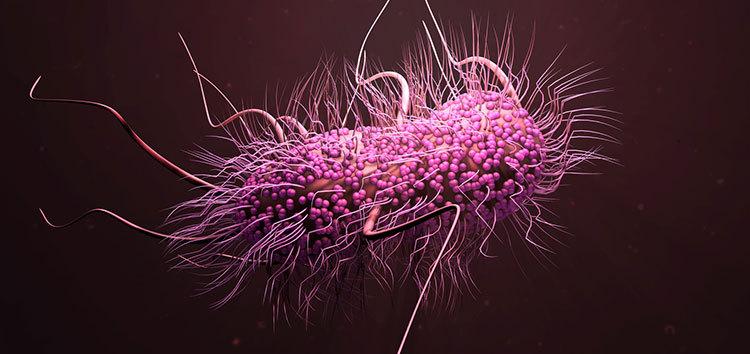 دودة صغيرة تحوي مضاد حيوي جديد قد يساعدنا في حربنا ضد الجراثيم المقاومة للمضادات الحيوية القضاء على الجراثيم سلبية الغرام
