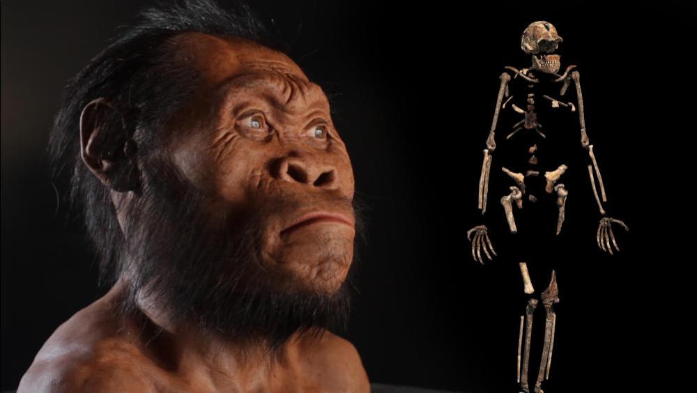 اكتشاف جديد لأحفورة قرد يمكن أن تفسر كيف بدأ البشر الأوائل المشي على قدمين العصر الحديث الوسيط (الميوسيني -Miocene) القردة العليا والبشر