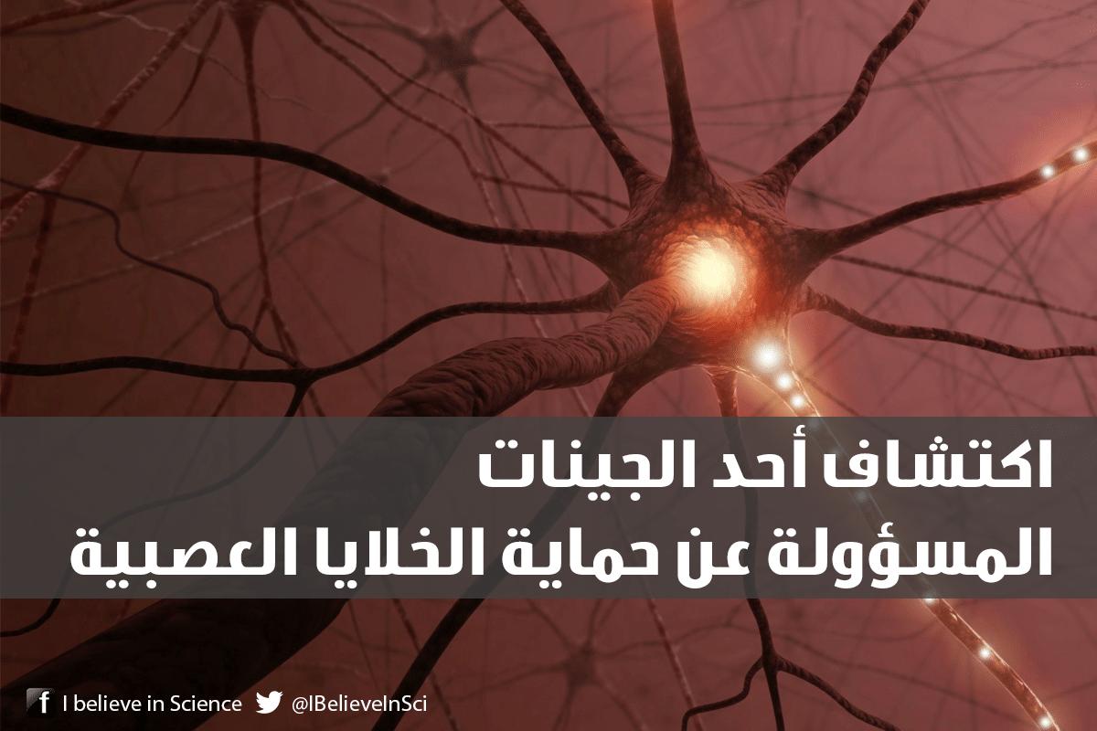 اكتشاف أحد الجينات المسؤولة عن حماية الخلايا العصبية