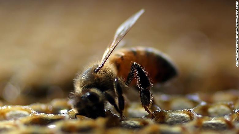النحل الجمع الطرح