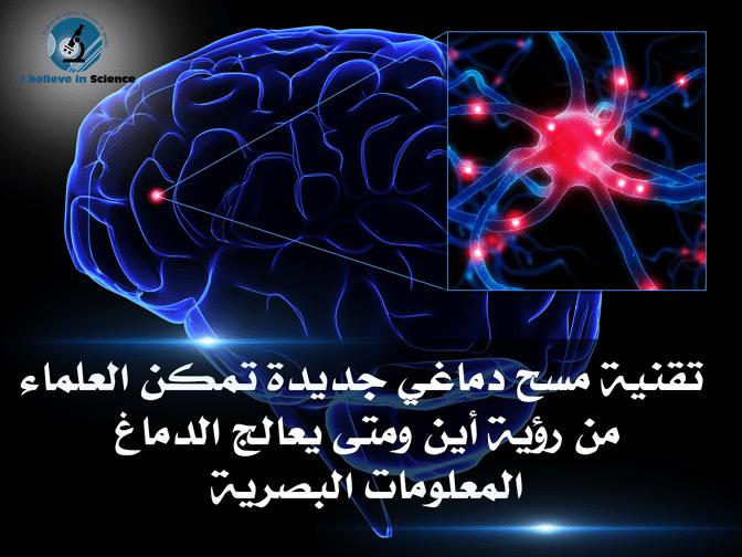 تقنية مسح دماغي جديدة تمكن العلماء من رؤية أين ومتى يعالج الدماغ المعلومات البصرية