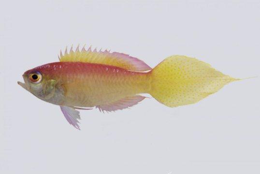 133 نوع جديد وصفته اكاديمية كاليفورنيا للعلوم في عام 2016
