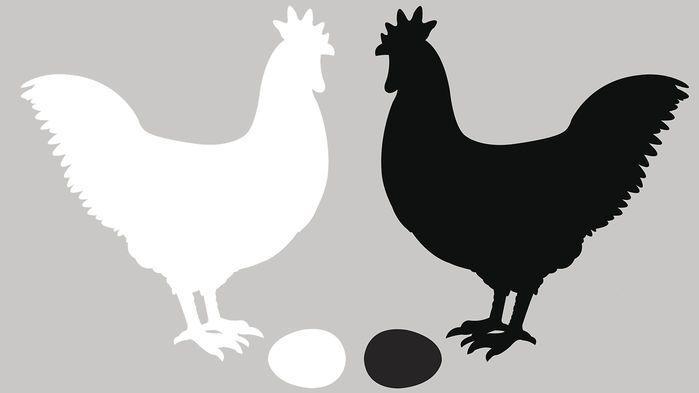 """تجربة """"البيضة أولًا أم الدجاجة"""" الكموميّة تغيّر مفهومنا حول """"قبل وبعد"""""""
