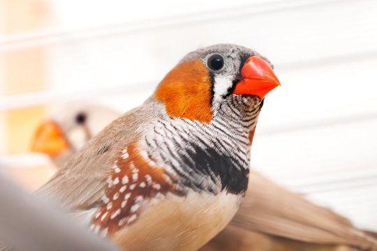 كيف تتعلّم الطيور؟