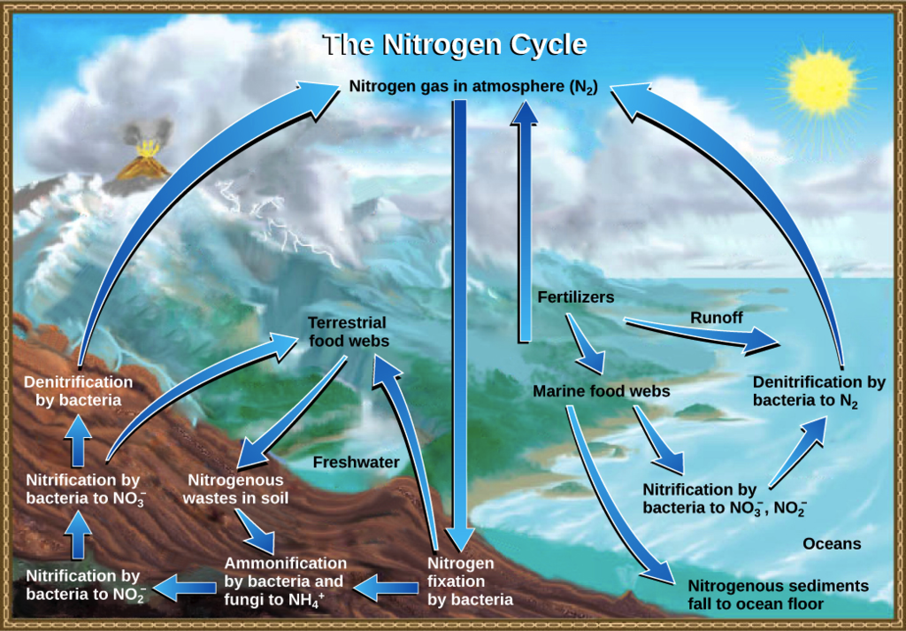 Nitrogen cycle detailed explanation with pictures nitrogen fixation in the atmosphere excessive use of fertilizer containing nitrogen bacteria