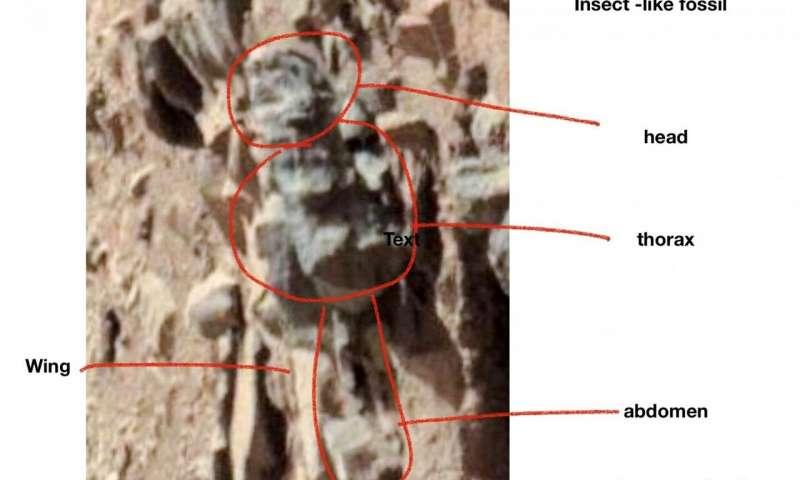 head: رأس/ thorax: صدر/ wing: جناح/ abdomen: بطن : Figure 2