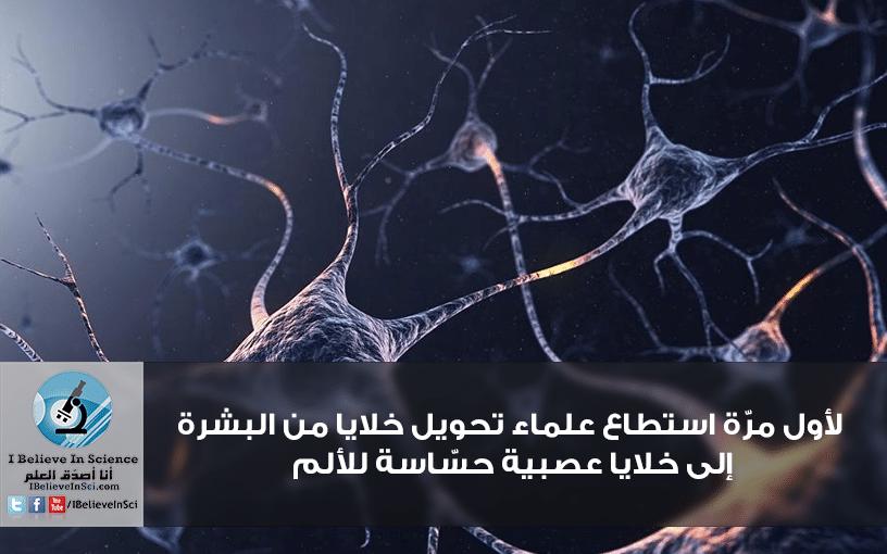 لأول مرّة استطاع علماء تحويل خلايا من البشرة إلى خلايا عصبية حسّاسة للألم.