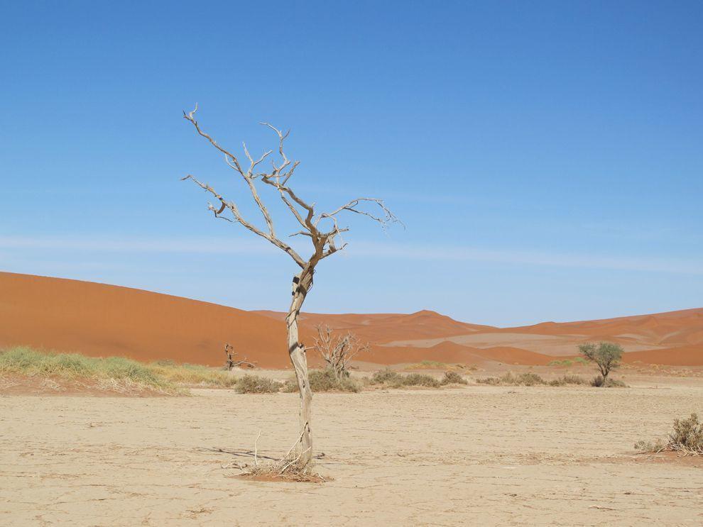 النظام البيئي 28597.jpg