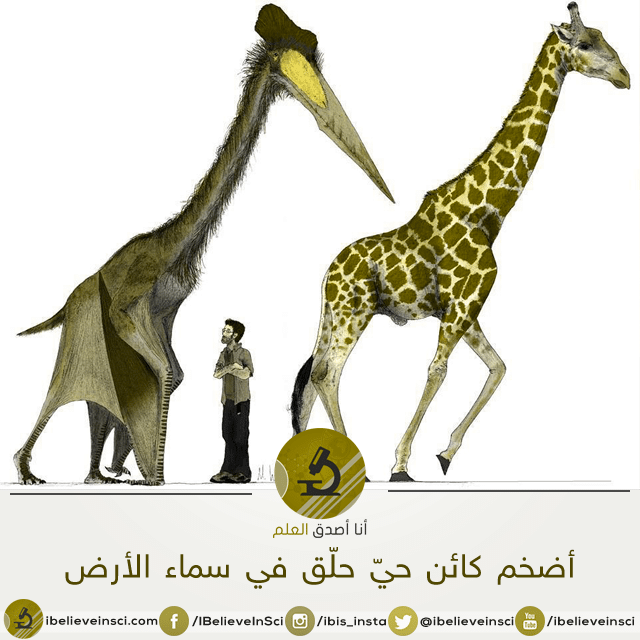 الكويتزالكوتلس -  أحد أضخم الحيوانات الطائرة التي طافت الأرض