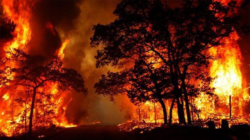 حرائق الغابات في استراليا: طيور أشعلتها عمدًا!؟!