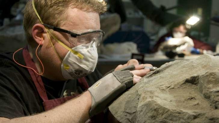 موناليزا الديناصورات أحفورة تكشف أسرار غير متوقع