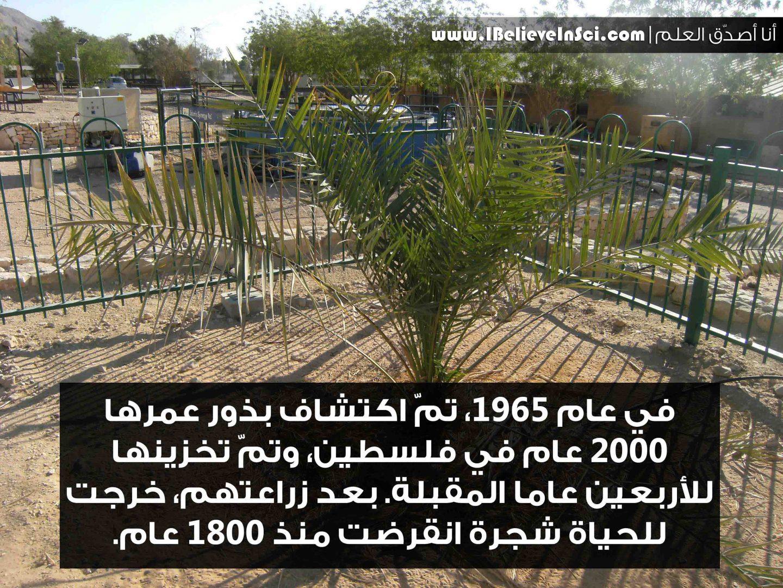حين خرج إلى الحياة شجرة انقرضت منذ 1800 عام
