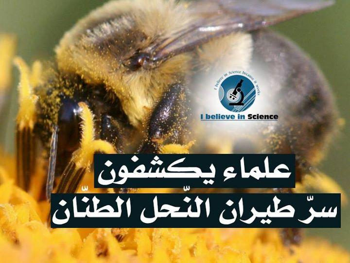 كشف سر طيران النحل الطنان