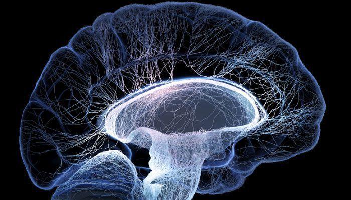 اكتشاف مصدر جديد لتطور الدماغ يعيد خلط الأوراق