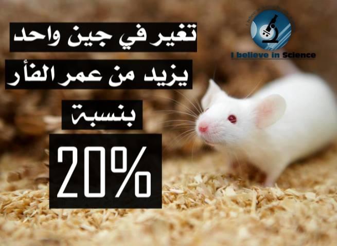 تغيّر في جين واحد يزيد من عُمر الفأر بنسبة 20%